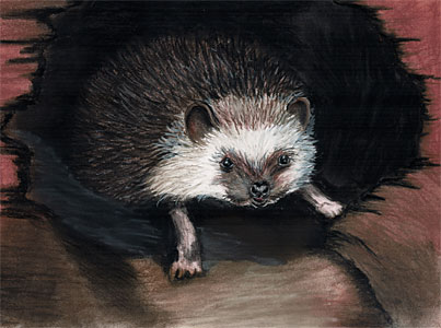 Karin Pfolz: Ole, der kleine Igel - Ole, the little hedgehog