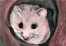 "Karin Pfolz: ""Als die Haselmaus ihre Farbe verlor"" / ""As the Dormouse lost her Color"""